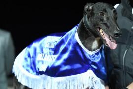 Aston Kimetto's barnstorming Ballarat triumph