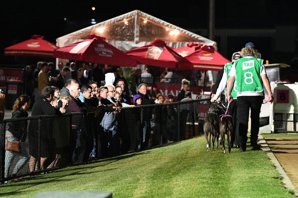 Ballarat distance greyhound racing